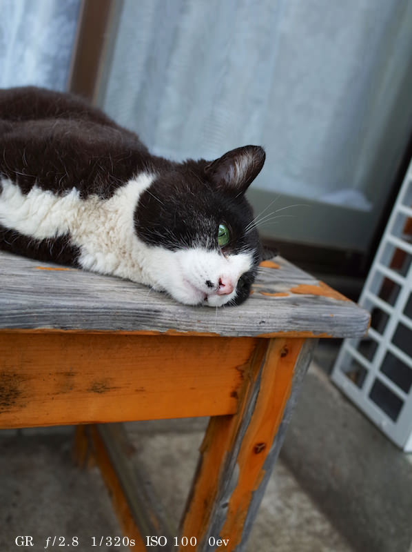 GR Cat Photo 12