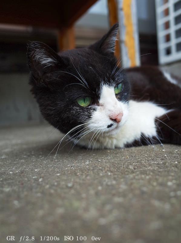 GR Cat Photo 14