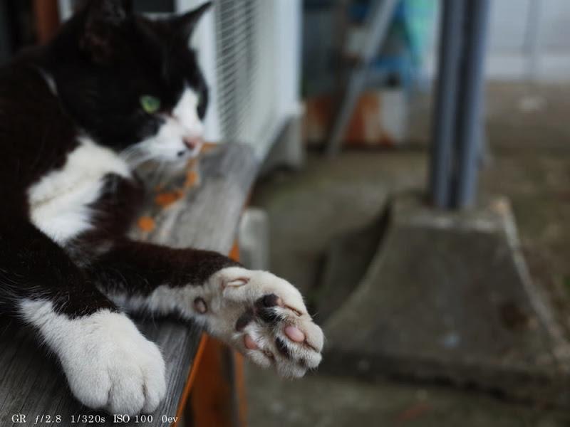 GR Cat Photo 3